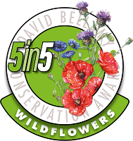 5in5 David Bellamy Wildflowers