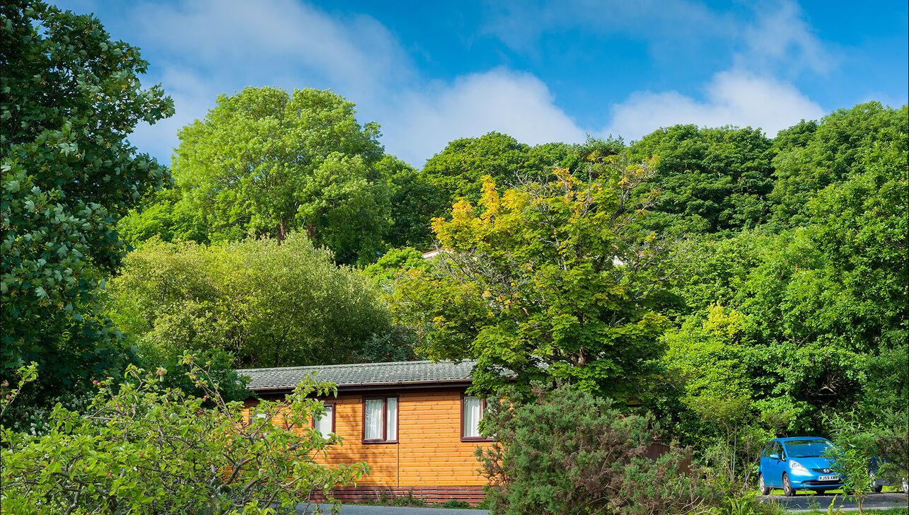 modern lodges and holiday homes in a woodland setting